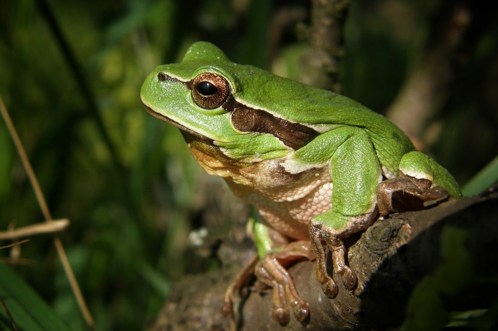Sales Success - The Story of the Frog